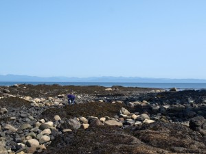 crescent-beach-rocks-65778