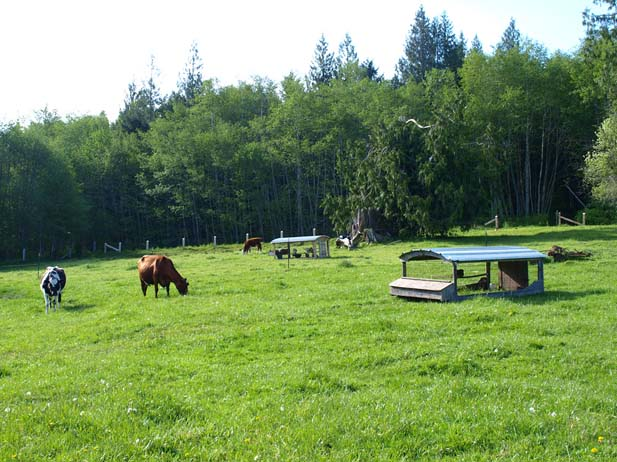 Port Angeles Country Estate: Farming close to surfing