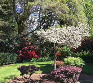 Snohomish home for sale - front yard