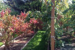 19-Kenmore-home-for-sale-backyard-4