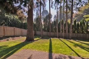 25-backyard
