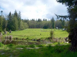 12-port-angeles-ranch-land-3936