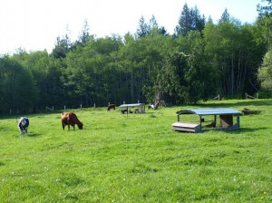 13-port-angeles-ranch-land-4103